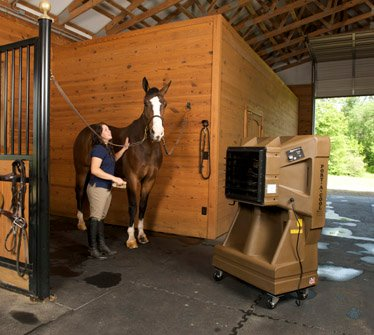 heat stress horses stables how to keep cool